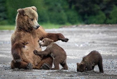 Alaska Wall Art - Photograph - A Mothers Love by Renee Doyle