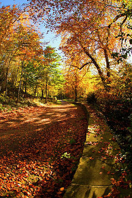 A Path Covered With Fallen Leaves Art Print by John Short