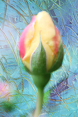 Photograph - A Rose Is A Rose by Marie Jamieson