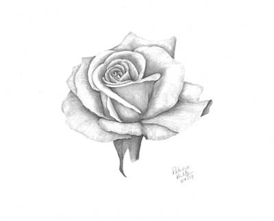 A Roses Beauty Art Print