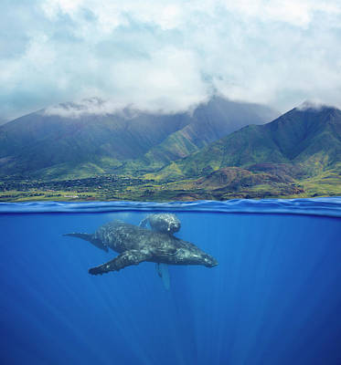 A Split Image Of A Pair Of Humpback Art Print by Dave Fleetham