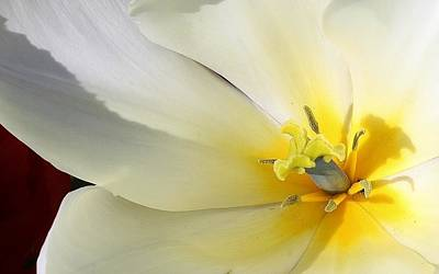 Photograph - A Touch Of Elegance by Bruce Bley