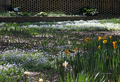 Spring Bulbs Digital Art - A Very Special Garden V by Suzanne Gaff
