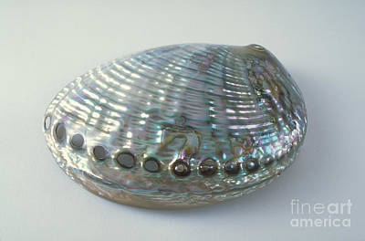 Abalone Shell Art Print by Barbara Strnadova