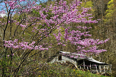 Cercis Canadensis Photograph - Abandoned . . . by Thomas R Fletcher