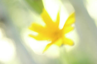 Abstract Flowers Images Photograph - Abstract Of Wildflower In Early Morning by Phil Schermeister