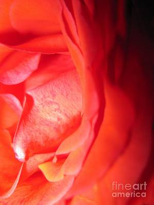 Photograph - Abstract Orange Rose 10 by Tara  Shalton