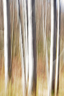 Photograph - Abstract Trees by Barbara West