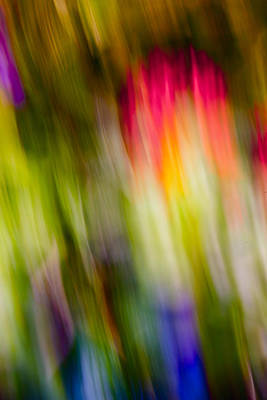 Photograph - Abstraction Of Butterflies by Jon Glaser