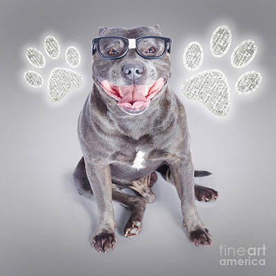 Panting Photograph - Access To Smart Dog Training by Jorgo Photography - Wall Art Gallery