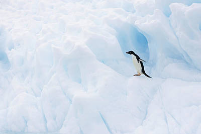 Adelie Penguin On Iceberg Art Print by Suzi Eszterhas