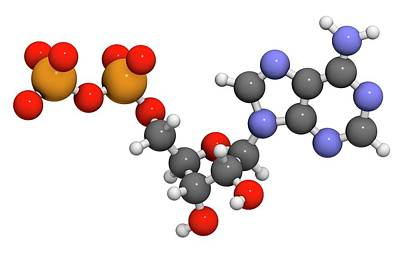 Adenosine Diphosphate Molecule Art Print by Molekuul