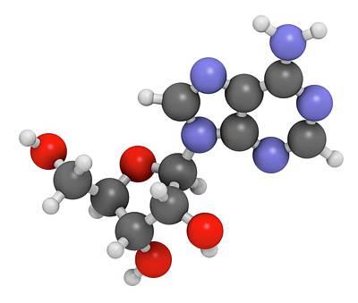 Nucleoside Photograph - Adenosine Purine Nucleoside Molecule by Molekuul