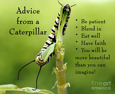 Photograph - Advice From A Caterpillar by Nancy Greenland