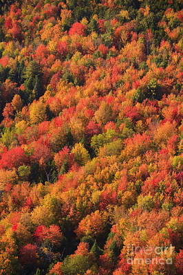 Photograph - Aerial View Of Fall Foliage In Vermont. by Don Landwehrle