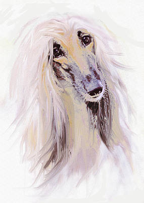 Long Hair Digital Art - Afghan Hound by Jane Schnetlage