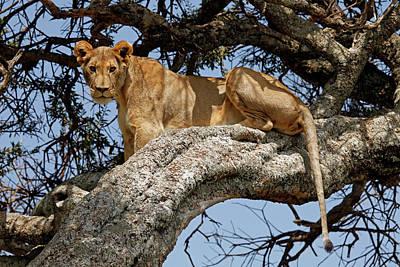Animal Behavior Photograph - Africa, Kenya, Maasai Mara by Kymri Wilt