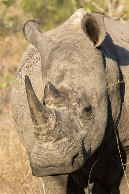 Rhinoceros Photograph - Africa, South Africa, Sabi Sabi Private by Jaynes Gallery