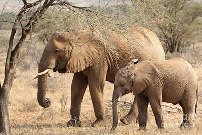 Photograph - African Elephant Mother And Calf by Liz Leyden