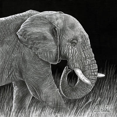 Elephant Pencil Drawing Drawing - Ancient by Sarah Batalka
