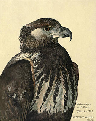 Eagle Painting - African Sea Eagle by Anton Oreshkin