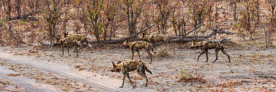 African Wild Dogs Lycaon Pictus Art Print by Panoramic Images
