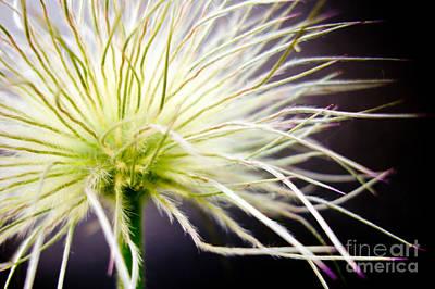 Photograph - After Blossom by Bernadett Pusztai