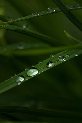 Photograph - After The Rain by Karol Livote