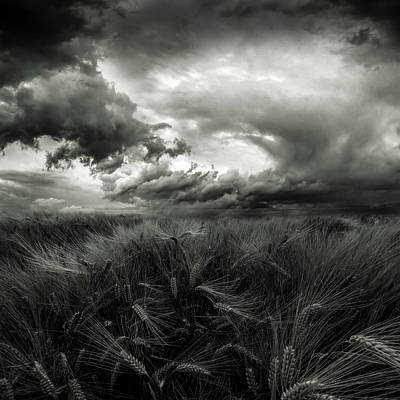 Plantations Photograph - After The Storm by Franziskus Pfleghart