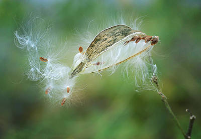 Photograph - Against The Wind 2 by Fraida Gutovich