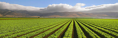 Lettuce Photograph - Agriculture - A Mature Green Leaf by Timothy Hearsum