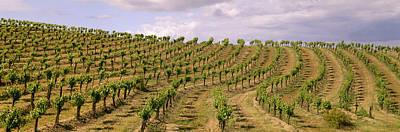 Agriculture - Hillside Wine Grape Art Print