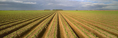 Lettuce Photograph - Agriculture - Rows Of Early Growth by Timothy Hearsum