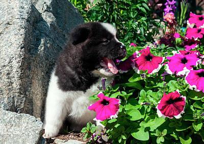 Japanese Puppy Photograph - Akita Puppy In The Flowers (mr & Pr by Zandria Muench Beraldo