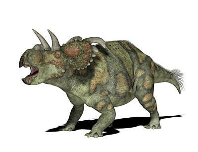 Paleozoology Photograph - Albertaceratops Dinosaur by Friedrich Saurer