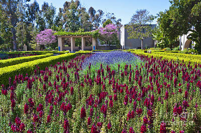 Photograph - Alcazar Garden Vibrant Color Display Balboa Park  by David Zanzinger