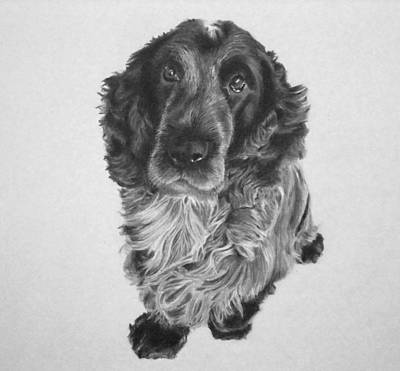 Cocker Spaniel Drawing - Alfie by Mike OConnell