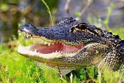 Photograph - Alligator by Ira Runyan