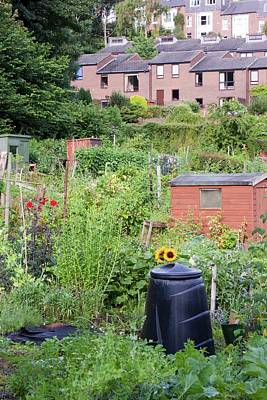 Allotment Photograph - Allotments by Ashley Cooper