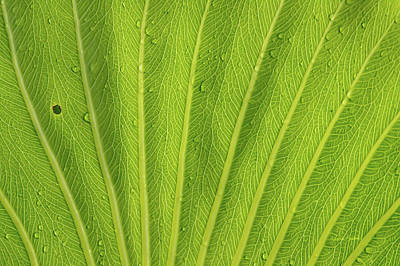 Tropical Leaves Photograph - Almost Perfect by Ramona Murdock