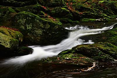 Photograph - Along Spruce Brook by Mike Farslow