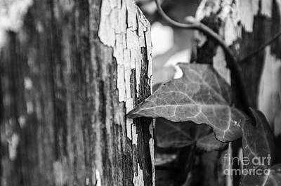 Photograph - Along The Fence by JT Lewis
