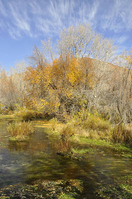 Fall Trees With Stream Photograph - Alpine Loop Scenic Byway American Fork Canyon Utah by Wendy Elliott