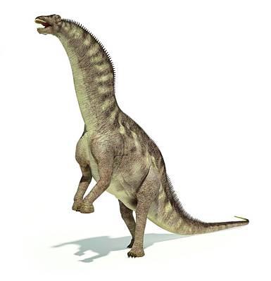 Prehistorical Photograph - Amargasaurus Dinosaur by Leonello Calvetti