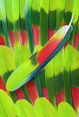 Darrell Gulin Photograph - Amazon Parrot Tail Feather Design by Darrell Gulin