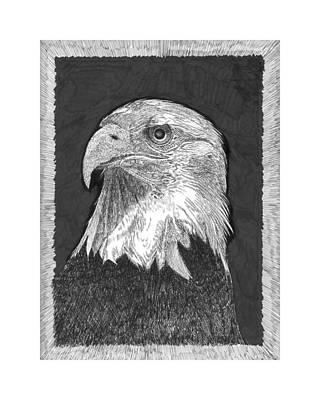 Skagit Drawing - American Bald Eagle by Jack Pumphrey