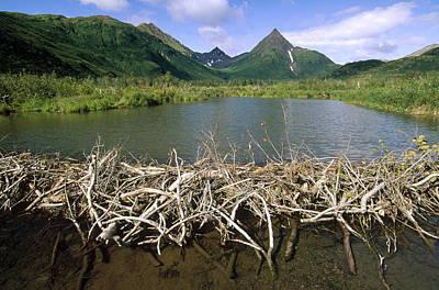 Silver River State Park Photograph - American Beaver Dam Silver Horn Creek by Gerry Ellis