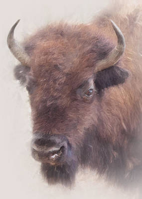 Photograph - American Buffalo by David and Carol Kelly