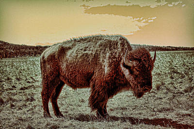 Buffalo Art Digital Art - American Buffalo  by Tony Grider