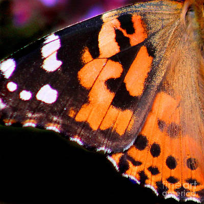 Photograph - American Painted Lady Butterfly Wing Square by Karen Adams